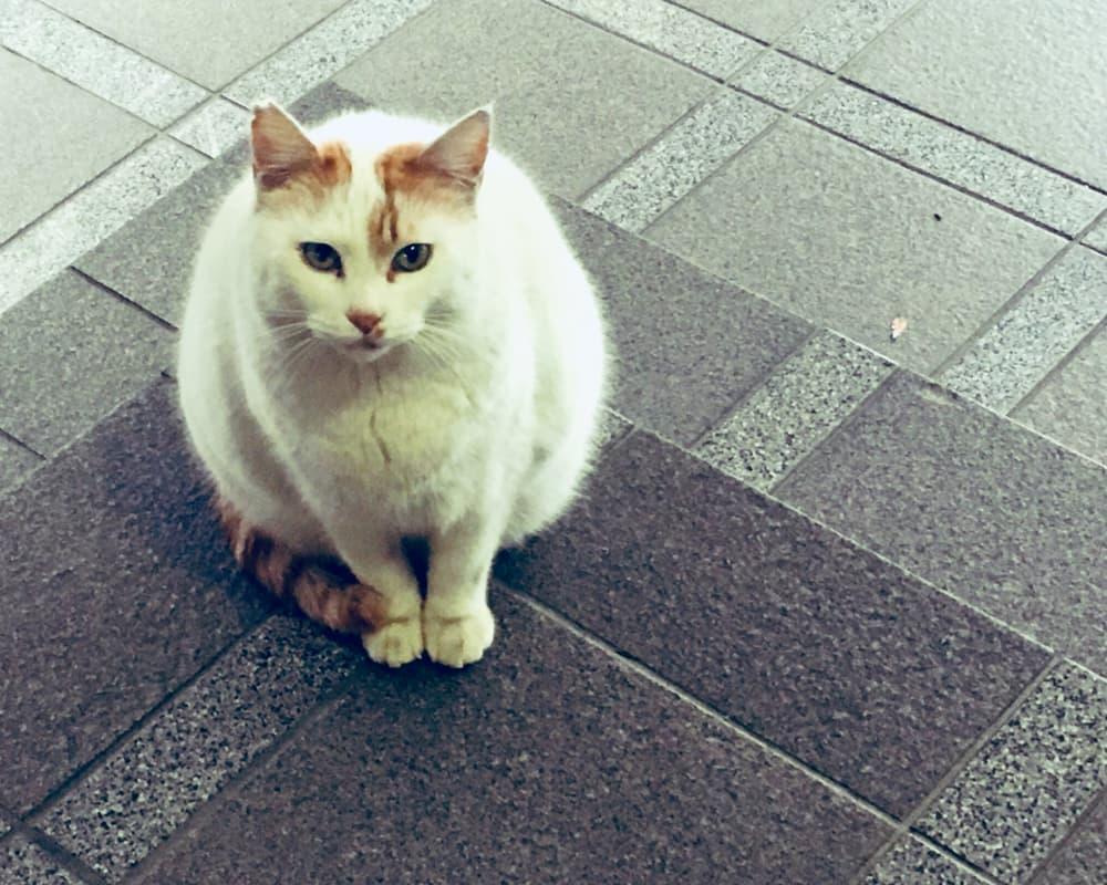 ドロップ先の猫
